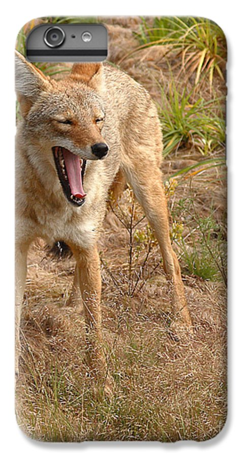 Coyote IPhone 6 Plus Case featuring the photograph Coyote Caught In A Yawn by Max Allen