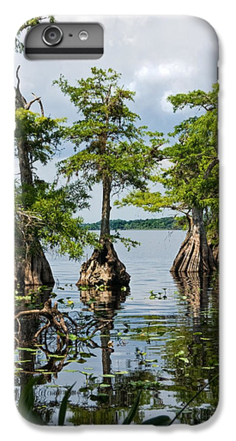 Trees IPhone 6 Plus Case featuring the photograph Cypress Reflections by Christopher Holmes
