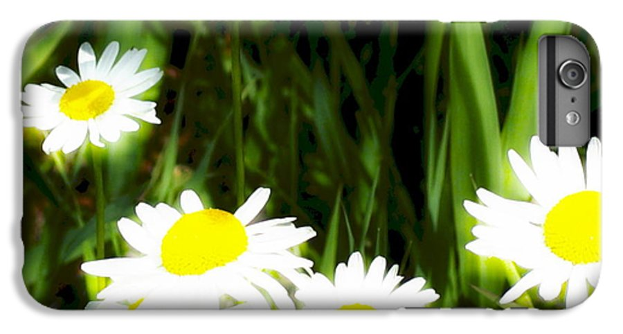 Daisies IPhone 6 Plus Case featuring the photograph Daisy Dream by Idaho Scenic Images Linda Lantzy