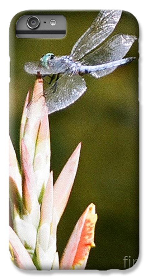 Dragonfly IPhone 6 Plus Case featuring the photograph Damselfly by Dean Triolo