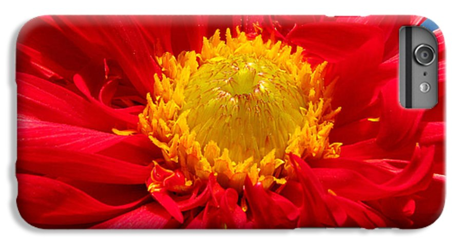 Dhalia IPhone 6 Plus Case featuring the photograph Dhalia by Amanda Barcon