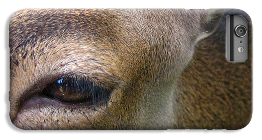 Doe IPhone 6 Plus Case featuring the photograph Doe by Melissa Parks