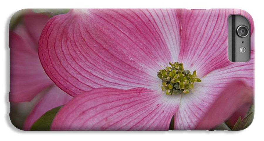 Dogwood IPhone 6 Plus Case featuring the photograph Dogwood Bloom by Idaho Scenic Images Linda Lantzy