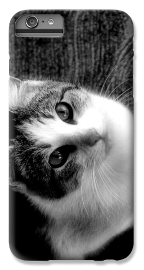 Cat IPhone 6 Plus Case featuring the photograph Don't Ever Leave by Gaby Swanson