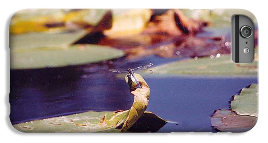 Insect IPhone 6 Plus Case featuring the photograph Dragon Fly by Margaret Fortunato