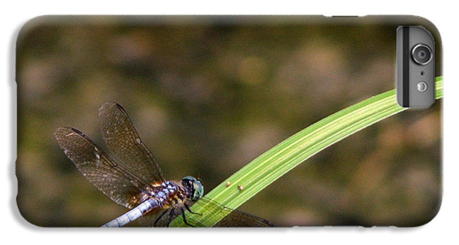 Dragonfly IPhone 6 Plus Case featuring the photograph Dragonfly by Amanda Barcon