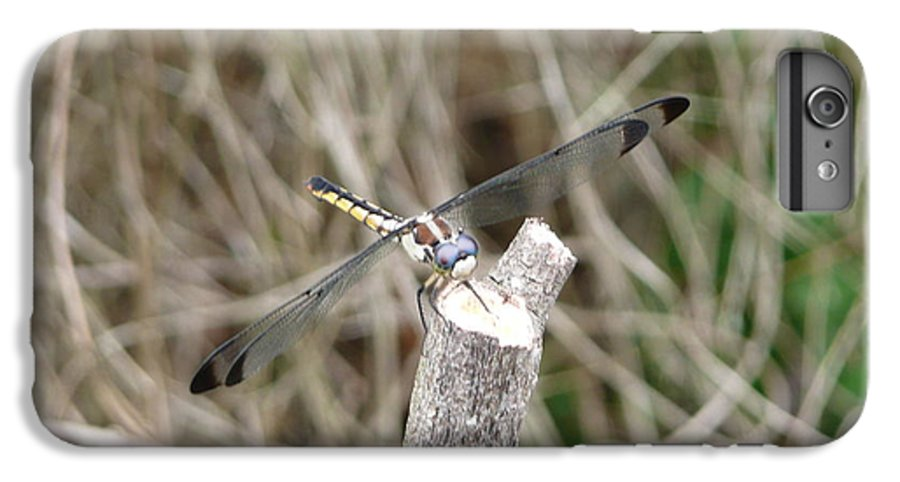 Wildlife IPhone 6 Plus Case featuring the photograph Dragonfly I by Kathy Schumann