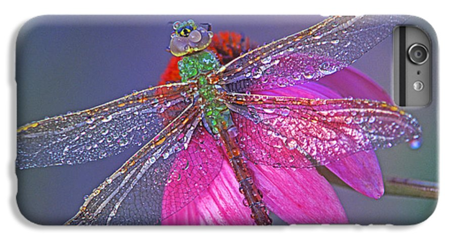 Dew Covered Dragonfly Rests On Purple Cone Flower IPhone 6 Plus Case featuring the photograph Dreaming Dragon by Bill Morgenstern