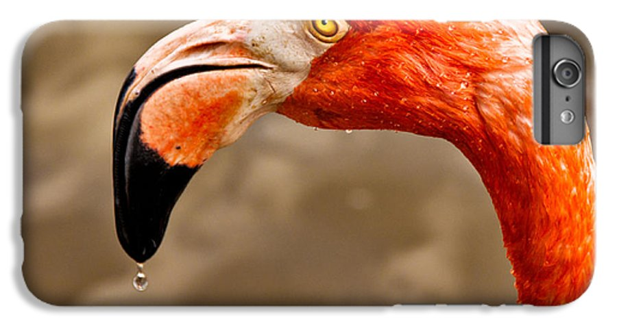 Flamingo IPhone 6 Plus Case featuring the photograph Dripping Flamingo by Christopher Holmes