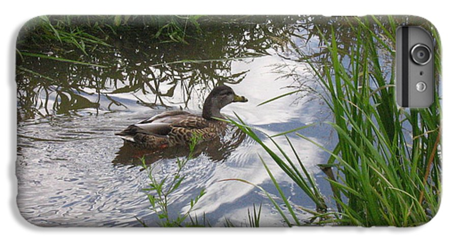 Duck IPhone 6 Plus Case featuring the photograph Duck Swimming In Stream by Melissa Parks