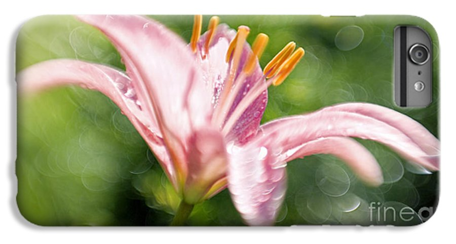 Easter Lily Lilium Lily Flowers Flower Floral Bloom Blossom Blooming Garden Nature Plant Petals Plants Grow Species Garden One Single 1 Petals Close-up Close Up Cultivate Botanical Botany Nature IPhone 6 Plus Case featuring the photograph Easter Lily 1 by Tony Cordoza