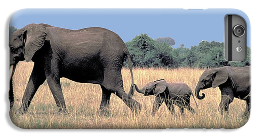 Elephant IPhone 6 Plus Case featuring the photograph Elephant Family by Carl Purcell