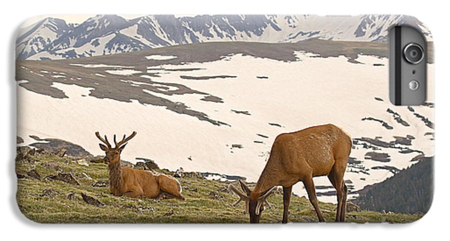 Elk IPhone 6 Plus Case featuring the photograph Elk Bulls In The Highlands Of Colorado by Max Allen