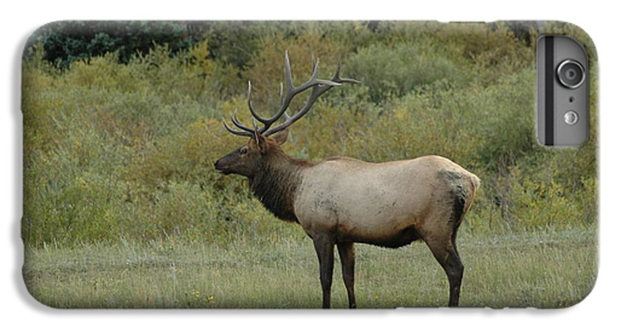Elk IPhone 6 Plus Case featuring the photograph Elk by Kathy Schumann