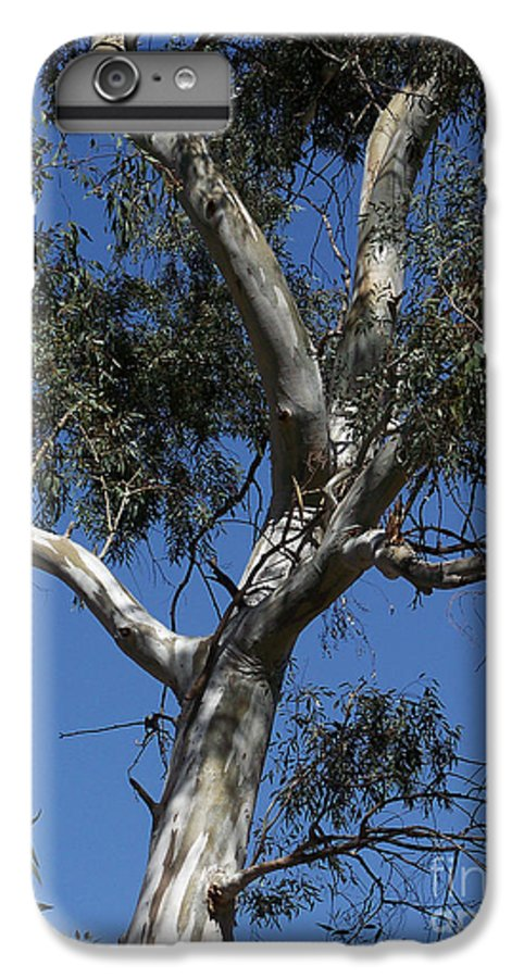 Trees IPhone 6 Plus Case featuring the photograph Eucalyptus by Kathy McClure