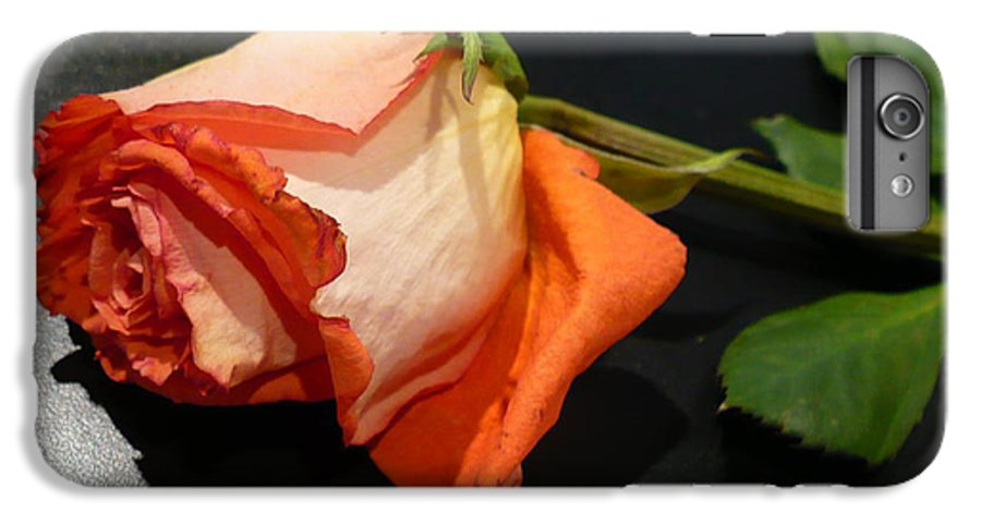 Botanical IPhone 6 Plus Case featuring the photograph Fading Rose by Florene Welebny