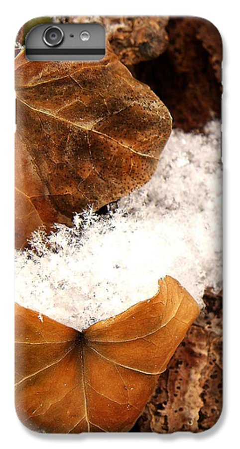 Fall IPhone 6 Plus Case featuring the photograph Fall And Winter by Gaby Swanson