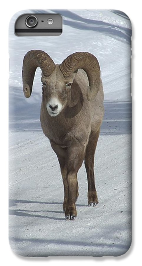 Bighorn Sheep IPhone 6 Plus Case featuring the photograph Farewell To The King by Tiffany Vest