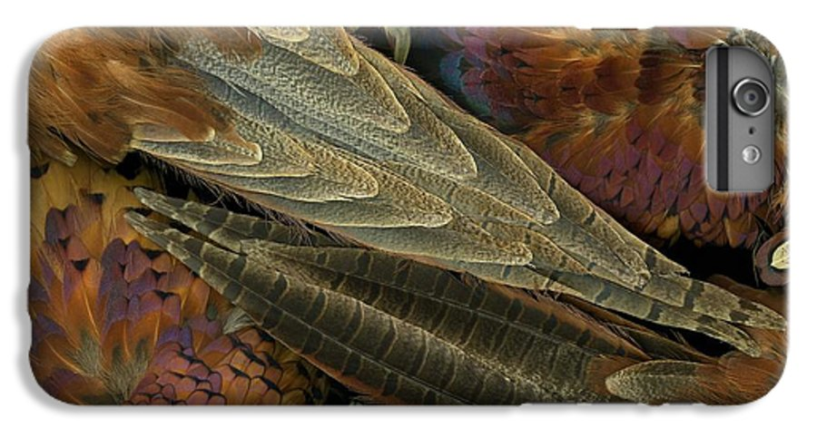 Pheasant IPhone 6 Plus Case featuring the photograph Featherdance by Christian Slanec