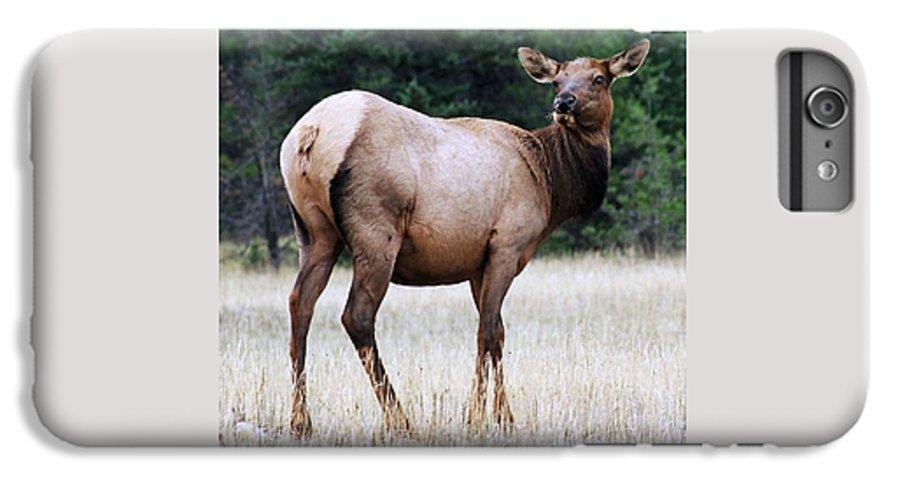 Elk IPhone 6 Plus Case featuring the photograph Feme Elk by Tiffany Vest