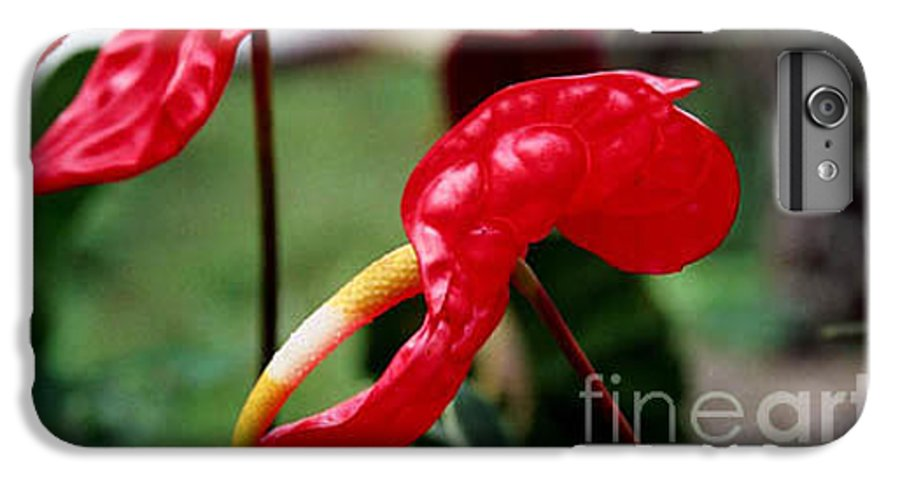 Exotic Flowers IPhone 6 Plus Case featuring the photograph Flamingo Flower by Kathy McClure