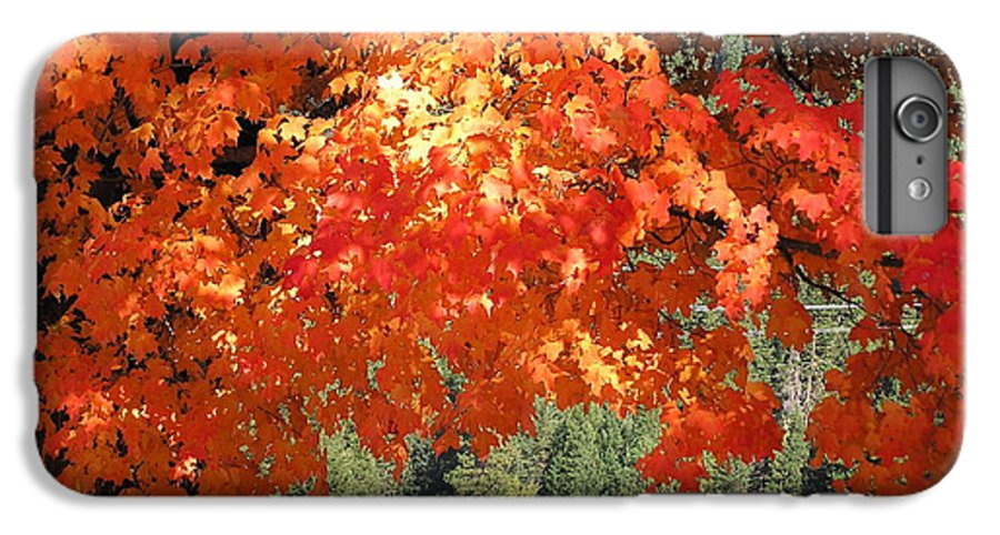 Autumn Photographs IPhone 6 Plus Case featuring the photograph Flickering Sunlight by Louise Magno