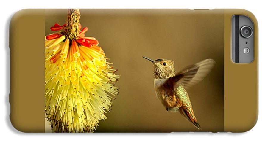 Hummingbird IPhone 6 Plus Case featuring the photograph Flight Of The Hummer by Mike Dawson