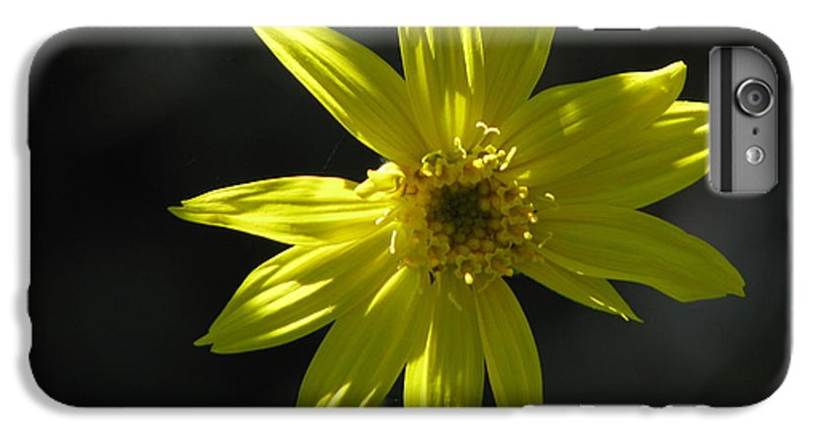 Light IPhone 6 Plus Case featuring the photograph Floral by Amanda Barcon