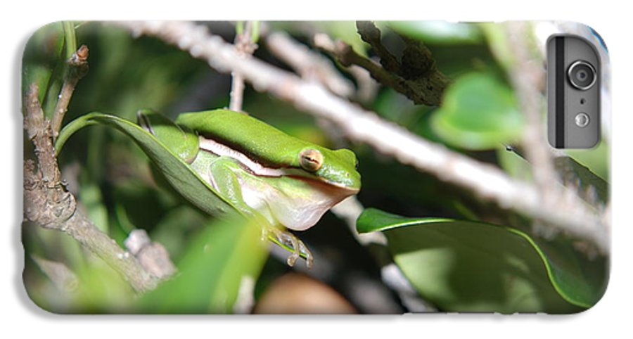 Florida IPhone 6 Plus Case featuring the photograph Florida Croacker by Margaret Fortunato