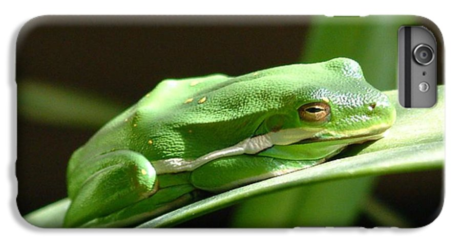 Frog IPhone 6 Plus Case featuring the photograph Florida Tree Frog by Ned Stacey
