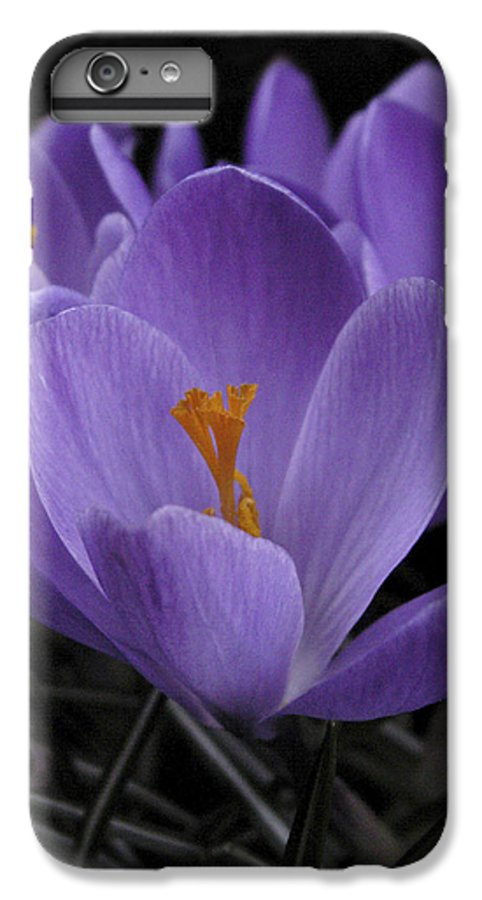 Flowers IPhone 6 Plus Case featuring the photograph Flower Crocus by Nancy Griswold