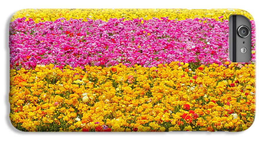Flower IPhone 6 Plus Case featuring the photograph Flower Fields Carlsbad Ca Giant Ranunculus by Christine Till