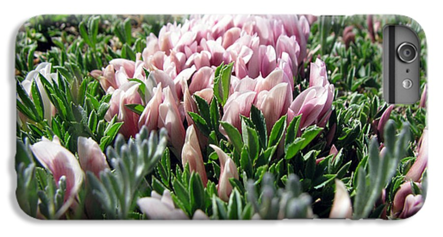 Flowers IPhone 6 Plus Case featuring the photograph Flowers In The Alpine Tundra by Amanda Barcon