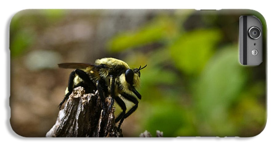 Fly IPhone 6 Plus Case featuring the photograph Fly On Mountain by Douglas Barnett