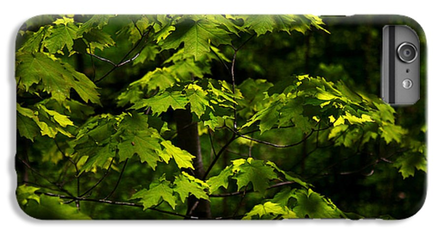 Forest IPhone 6 Plus Case featuring the photograph Forest Shades by Randy Oberg