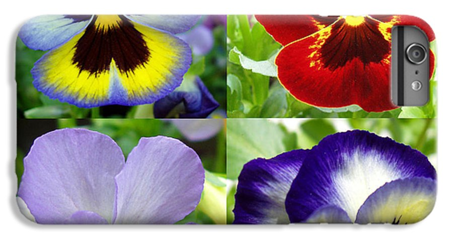 Pansy IPhone 6 Plus Case featuring the photograph Four Pansies by Nancy Mueller