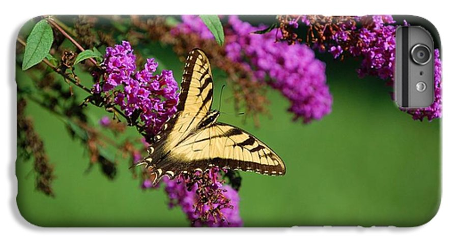 Butterfly IPhone 6 Plus Case featuring the photograph Freedom by Debbi Granruth