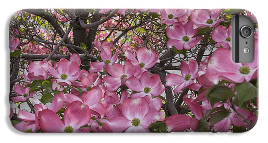 Dogwood IPhone 6 Plus Case featuring the photograph Full Bloom by Idaho Scenic Images Linda Lantzy