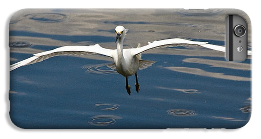 Snowy Egret IPhone 6 Plus Case featuring the photograph Gear Down by Christopher Holmes