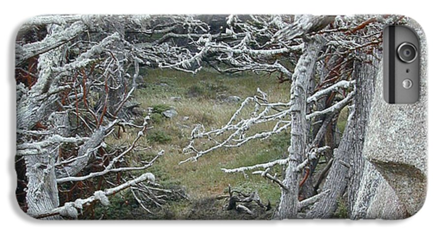 Lichens IPhone 6 Plus Case featuring the photograph Ghost Trees by Douglas Barnett