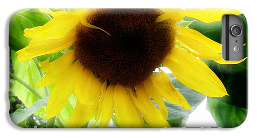 Sunflower IPhone 6 Plus Case featuring the photograph Golden Beauty by Idaho Scenic Images Linda Lantzy