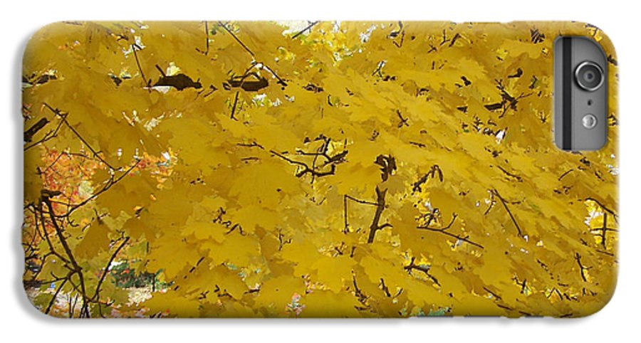 Fall Autum Trees Maple Yellow IPhone 6 Plus Case featuring the photograph Golden Canopy by Karin Dawn Kelshall- Best