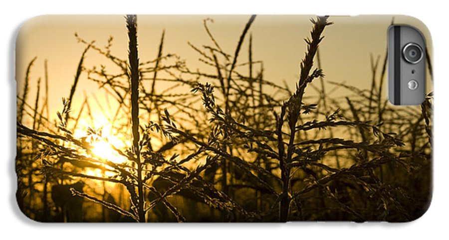 Golden IPhone 6 Plus Case featuring the photograph Golden Corn by Idaho Scenic Images Linda Lantzy