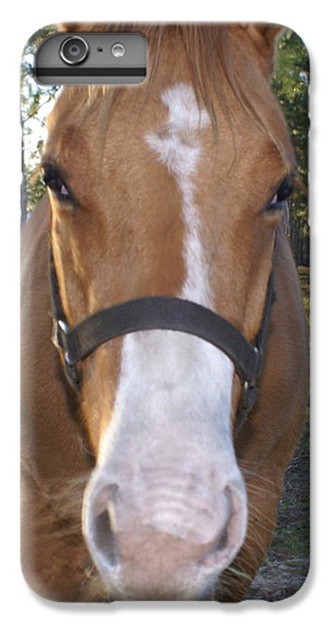 Horse IPhone 6 Plus Case featuring the painting Got Sugar by Debbie May