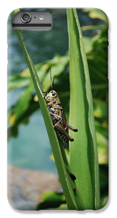 Field IPhone 6 Plus Case featuring the photograph Grasshopper by Margaret Fortunato