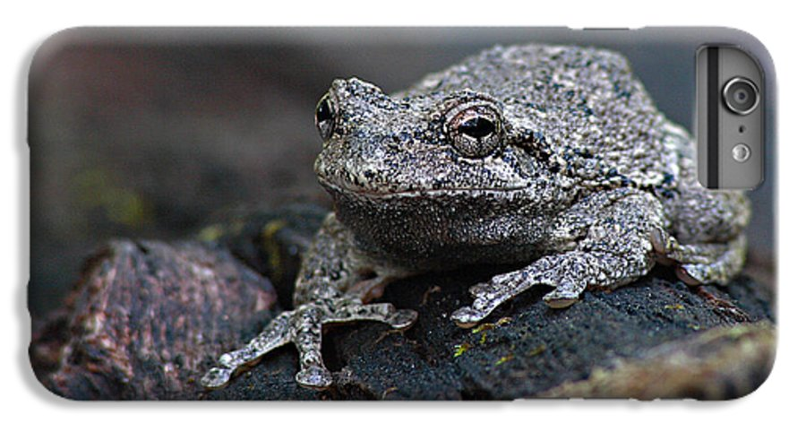 Frog IPhone 6 Plus Case featuring the photograph Gray Treefrog On A Log by Max Allen