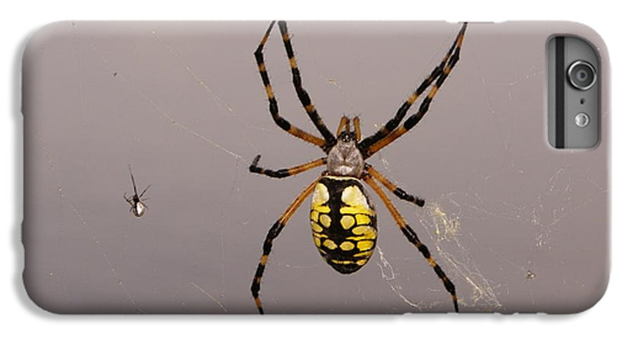 Spiders IPhone 6 Plus Case featuring the photograph Hanging In There by Debbie May