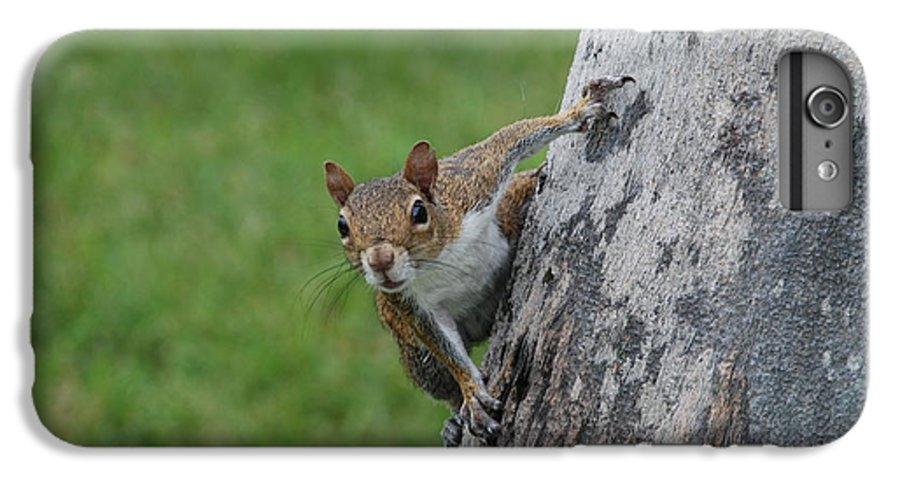 Squirrel IPhone 6 Plus Case featuring the photograph Hanging On by Rob Hans