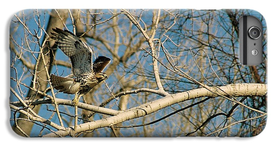 Hawk IPhone 6 Plus Case featuring the photograph Hawk by Steve Karol