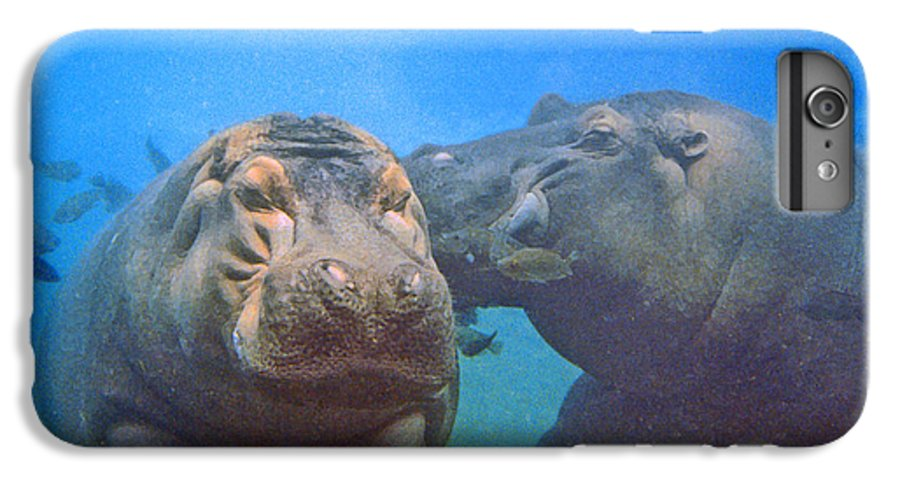 Animals IPhone 6 Plus Case featuring the photograph Hippos In Love by Steve Karol